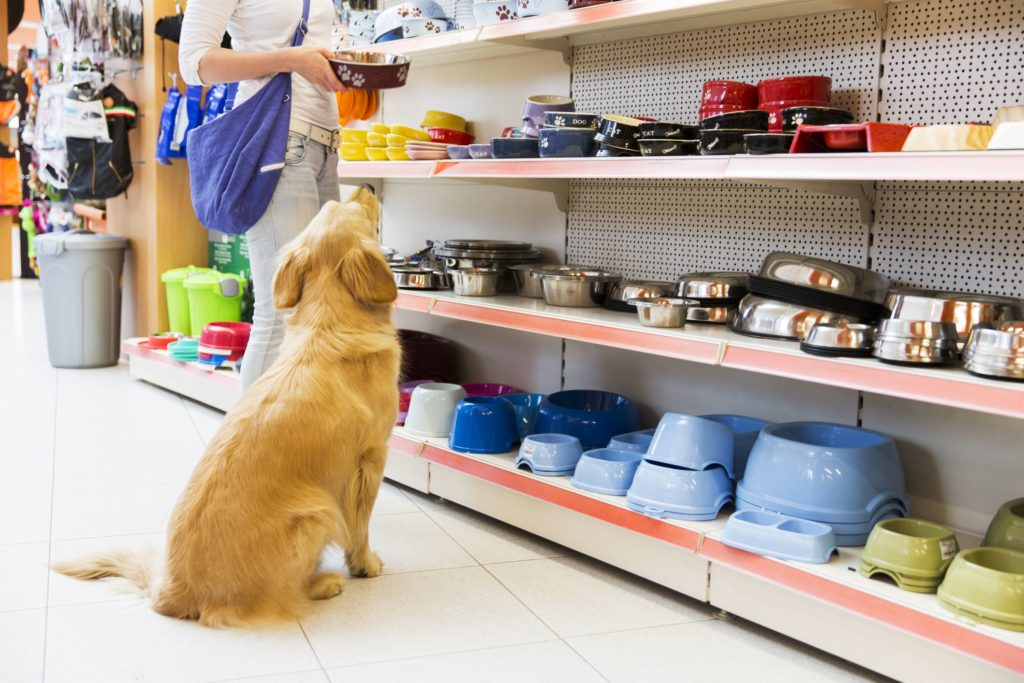 opening a pet store